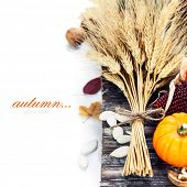 Autumn composition ( pumpkins, wheat and corn on old wooden table). Thanksgiving day concept  (with easy removable sample text)