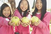 picture of three sisters  - Three young Asian sisters holding green apples - JPG