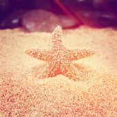Star fish in sand instagram