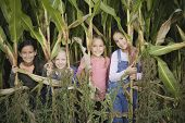 Young girls in cornfield