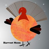 pic of turkey-cock  - Harvest moon Turkey  - JPG