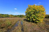 Autumn tree on flooded meadow
