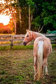 Horse standing by the fence at sunset