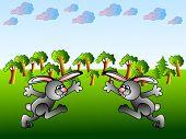 Funny Kaninchen