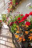 Interior Of Greenhouse With A Variety Of Flowers