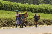 KIMUNYE, KENYA-SEPTEMBER 13, 2014: Unidentified workers carry baskets of freshly picked tea in the town of Kimunye, Kenya