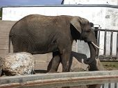 Elephant v2