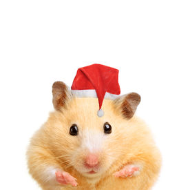 foto of gerbil  - Christmas hamster isolated on white background - JPG