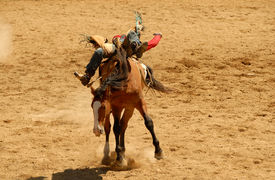 picture of bucking bronco  - A Cowboy riding a bucking bronco at a rodeo - JPG