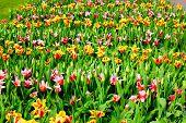 Green Stem Flower Rows