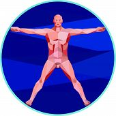 stock photo of male body anatomy  - Low Polygon style illustration on the Da Vinci man Vitruvian Man male human anatomy showing a male spread eagle spreading arms viewed from front set inside circle on isolated background - JPG