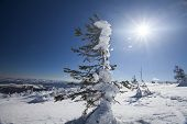 Beautiful winter landscape with snow covered trees and blue sky