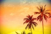 Retro Filtered Colorful Nature Background With Copy Space.