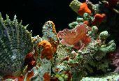 Pink Camoflage Fish