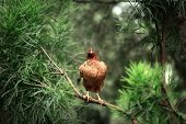 chicken on a tree