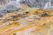 Travertine terraces at Mammoth Hot Springs, Yellowstone National Park