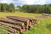 Rural Landscape With Log Piles At Summer