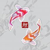Japanese watercolor carps koi swimming. Calligraphic simbol.