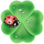 clover leaf with a ladybug