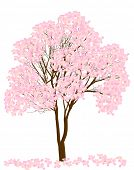 illustration with pink blossoming tree isolated on white background