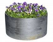 Street Barrel With  Pansies