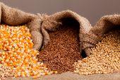 Organic Seeds: Corn Flax And Wheat In Jute Sack