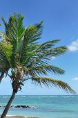 Palm tree in the caribbean