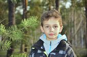 stock photo of little boys only  - Spring in the woods a little curly boy stands near a pine - JPG