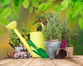Outdoor gardening tools and herbs, close-up.