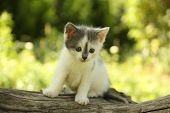 Gray Kitten Standing On The Tree Stump