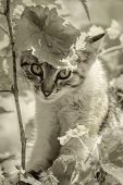 stock photo of kitty  - Image Of The Little Kitty In The Grapevine - JPG