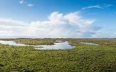 Swampy Nature Reserve