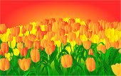 Tulips And Sunset Vector