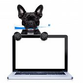 picture of dog teeth  - french bulldog dog holding electric toothbrush with mouth behind laptop pc computer screen isolated on white background - JPG