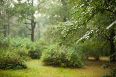 stock photo of rainy day  - Rainy day in summer forest  - JPG