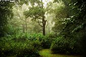 Rainy day in a forest with fog between green trees