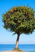 Single green tree on a hill. Clear blue sky and blue sea