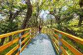 image of redwood forest  - boardwalk in forest - JPG