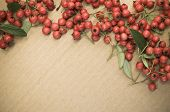 Small Wild Red Berries