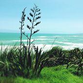 Shoreline and water, Raglan, New Zealand