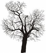 Mulberry Tree Vector.eps