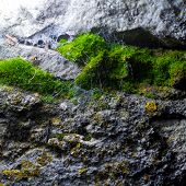 natural texture of the cave with moss and cobwebs