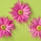 the text spring written on a blurred image of some pink gerbera daisies on a green background