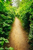 stock photo of garden eden  - Walkway Lane Path With Green Trees And Bushes In Garden - JPG