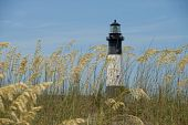 stock photo of sea oats  - Sea Oats with lighthouse in the background at Tybee Island Georgia - JPG