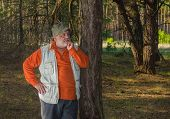 picture of coniferous forest  - Outdoor portrait of senior man in coniferous forest - JPG
