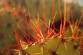 Cactus Spikes