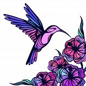 picture of hummingbirds  - Flying tropical hummingbird on white background with flowers - JPG