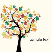 picture of fall trees  - beautiful autumn background with colorful tree and sample text - JPG