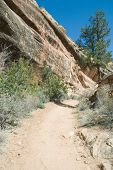 Trail To The Mica Mine With Pinon Pine